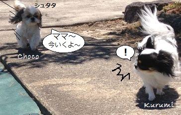 011_20130502200352.jpg