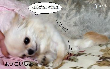 08_20130504210840.jpg