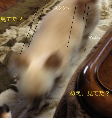 a3_20130507223932.jpg