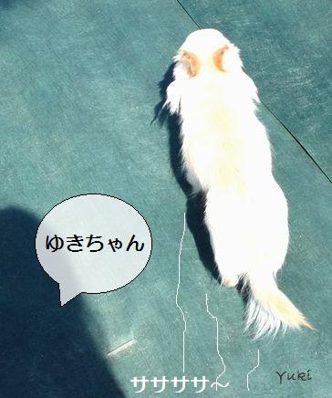 b6_20130322150031.jpg