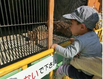 大内山動物園2