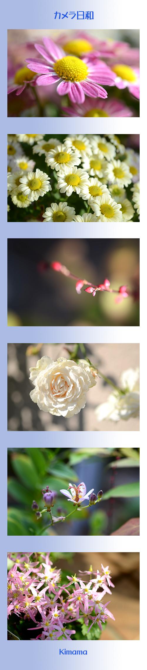 10月20日庭の花