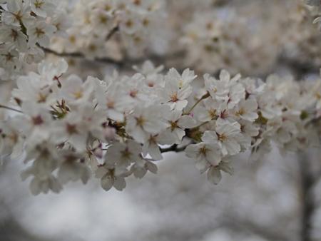 鶴見緑地 3月30日 2