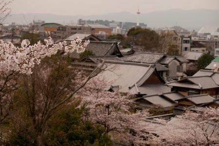 京都 高台寺 8