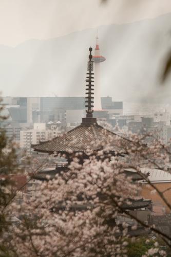 京都 高台寺 4