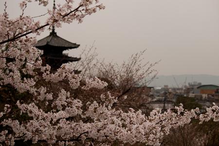 京都 高台寺 5