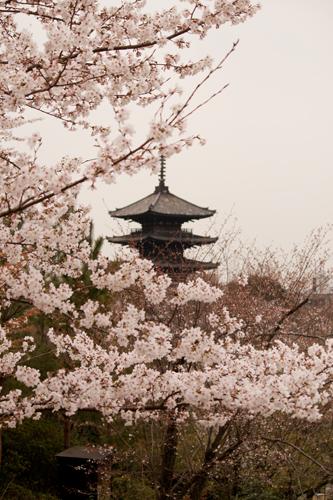 京都 高台寺 7