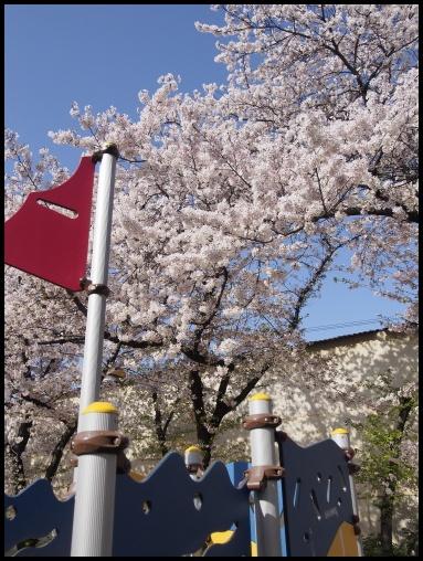 最後の桜 4