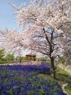 戸田川緑地公園③
