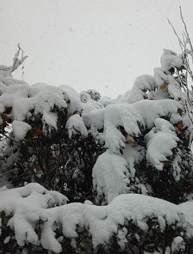 20130114 大雪2