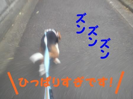 DCIM0024_convert_20120727194433.jpg