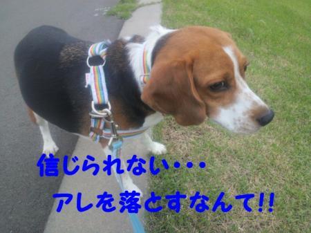 DCIM0097_convert_20120626151306.jpg