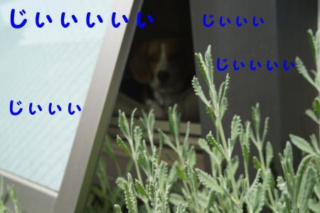 DSC04307_convert_20120601104314.jpg