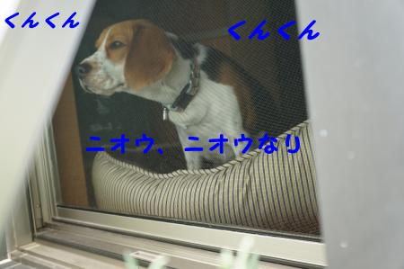 DSC04309_convert_20120601104416.jpg