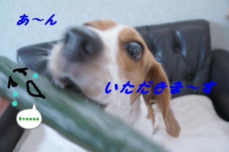 DSC04670_convert_20120604142905.jpg