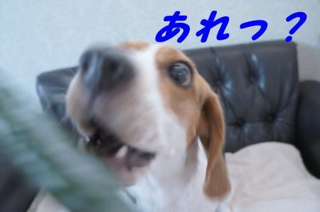 DSC04671_convert_20120604142940.jpg
