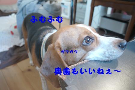 DSC04763_convert_20120619161150.jpg
