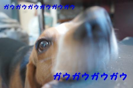 DSC04797_convert_20120619161444.jpg
