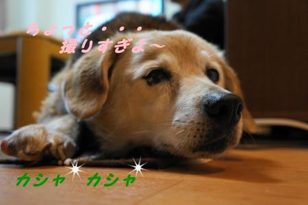 DSC04992_convert_20120611184604.jpg