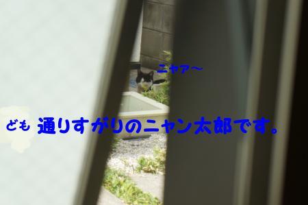 DSC05526_convert_20120723113356.jpg
