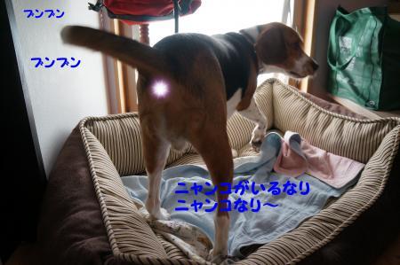 DSC05528_convert_20120723113630.jpg