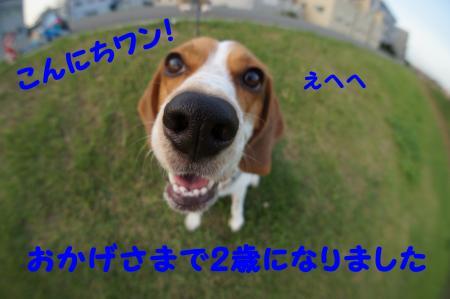 DSC05553_convert_20120727194705.jpg