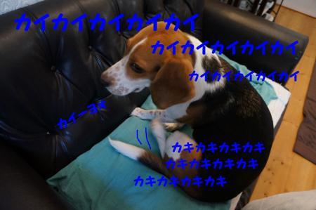 DSC06564_convert_20120822155349.jpg