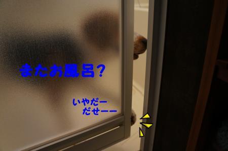 DSC06612_convert_20120822155740.jpg