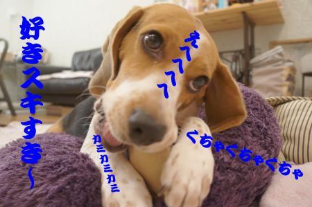 DSC06956_convert_20120829152504.jpg