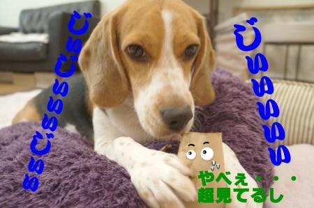 DSC06962_convert_20120829151117.jpg