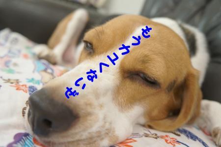 DSC07066_convert_20120918184628.jpg