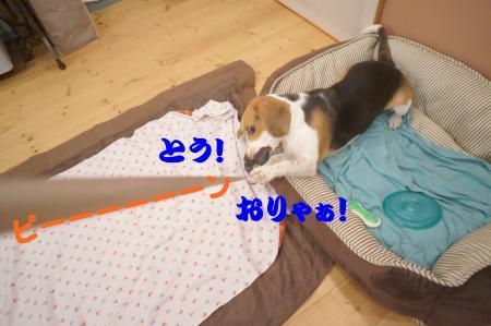 DSC07282_convert_20120912144139.jpg