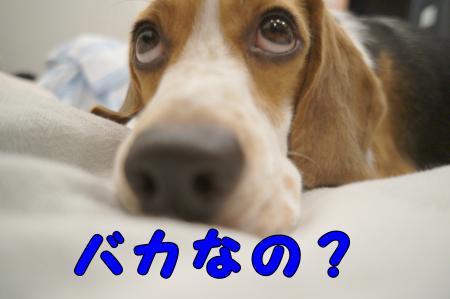 DSC07635_convert_20121001215530.jpg