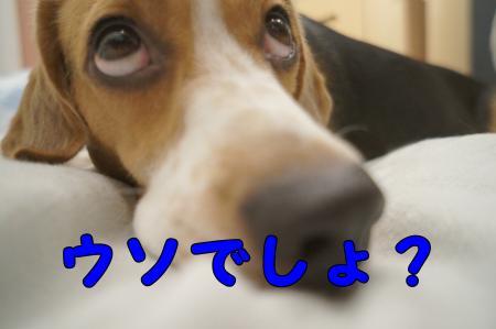 DSC07638_convert_20121001214445.jpg