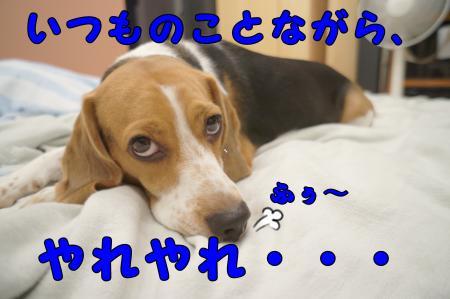 DSC07644_convert_20121001215321.jpg