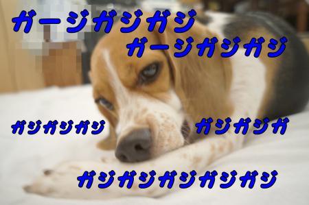 DSC07975_convert_20121004181453.jpg
