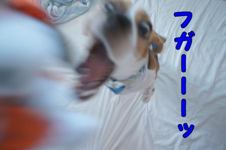 DSC08034_convert_20121002164529.jpg