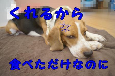 DSC08141_convert_20121103224838.jpg
