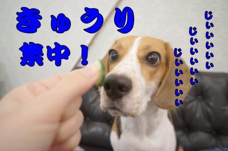 DSC08419_convert_20121018213006.jpg