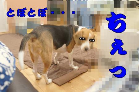 DSC08933_convert_20121023171547.jpg
