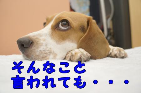 DSC09021_convert_20121118131632.jpg
