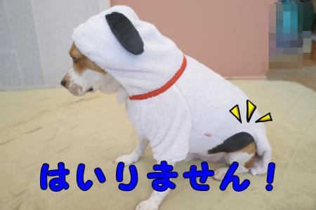 DSC09164_convert_20121110212932.jpg