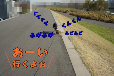 DSC09788_convert_20121211211136.jpg