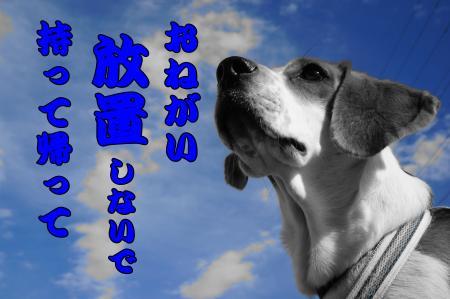 DSC09831_convert_20121211211543.jpg