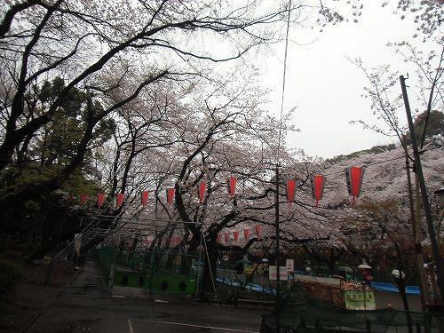 上野公園 不忍池 桜 満開