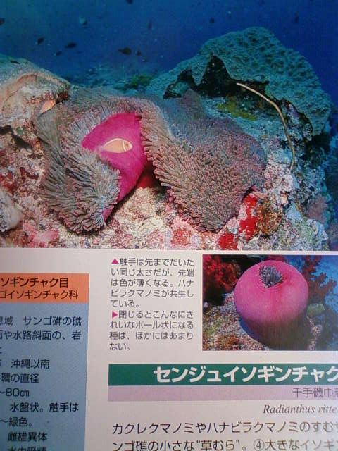 coral_b.jpg