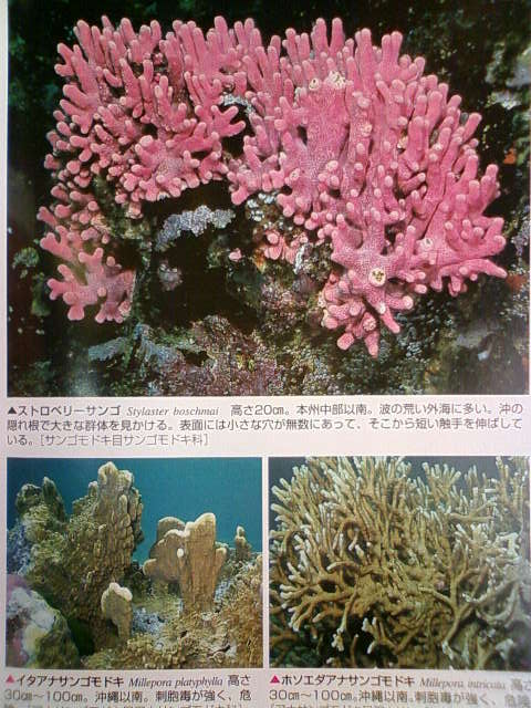 coral_c.jpg
