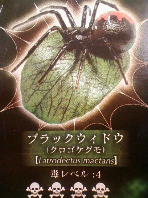 latodectus_mactans_a.jpg