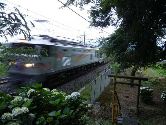 DSCN5045.jpg