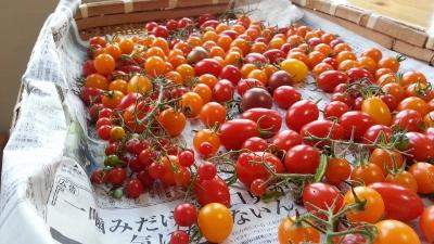 いろいろトマト20131006_164601_1 (400x225)
